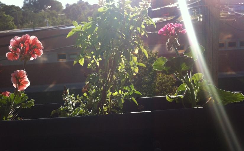 An end of summer second attempt at a windowgarden